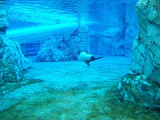 Aquatica Orlando: Dolphin Plunge