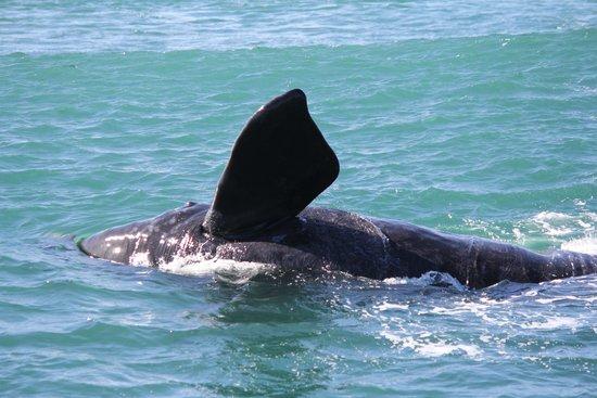 Ivanhoe Sea Safaris: Having Fun
