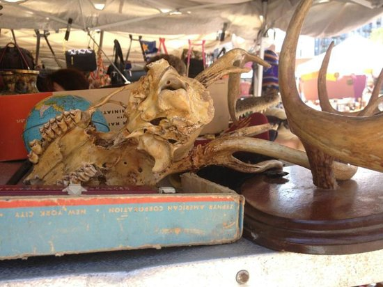 The Annex / Hell's Kitchen Flea Market: An animal skull for sale.  Not sure what animal.