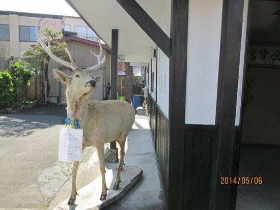 Yamani Bunkan: 鹿の出迎え