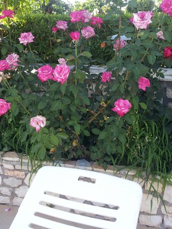 Limanaki Hotel: Sunbed by the pool with roses