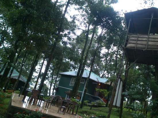Blue Bells Valley Resort: Tree house