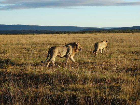 Shamwari Game Reserve Lodges: Alla ricerca di una gustosa colazione