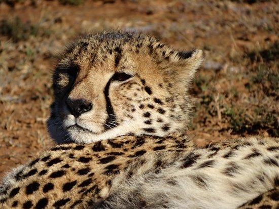 Shamwari Game Reserve Lodges: Il riposo dopo la caccia