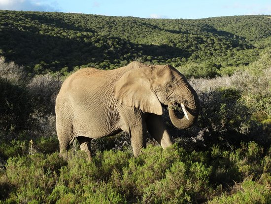 Shamwari Game Reserve Lodges: Spuntino con gli arbusti del bush