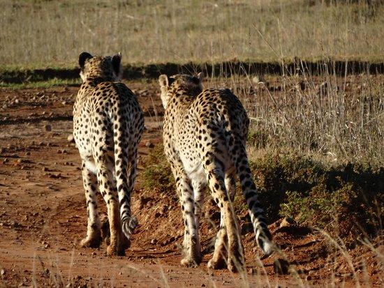 Shamwari Game Reserve Lodges: Fratelli diversi