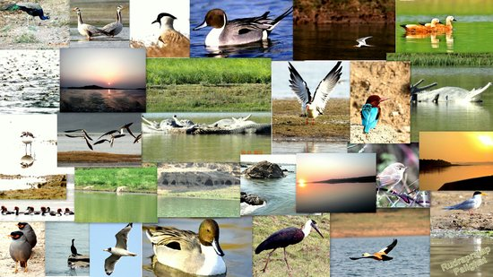 National Chambal Sanctuary