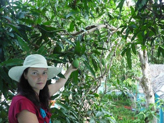 Sunny Resort Phu Quoc: Так легко дотянуться до манго
