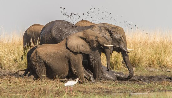 Steenbok Safari: Elephants