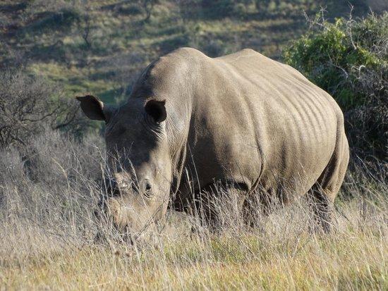 Schotia Safaris Private Game Reserve: Sopravvissuto ai bracconieri