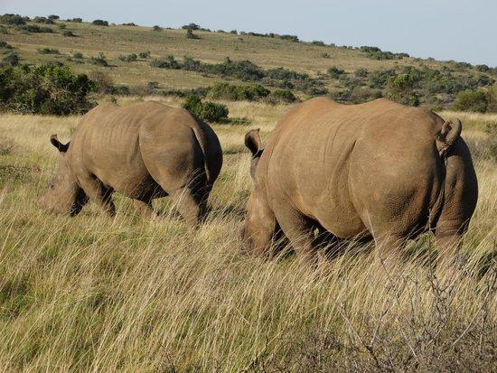 Schotia Safaris Private Game Reserve: Ai confini di Addo
