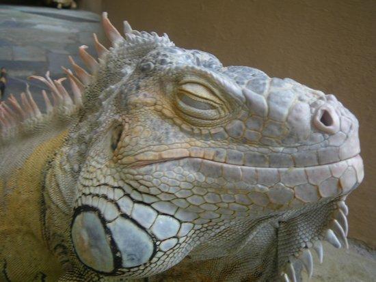 """Aquaworld Aquarium & Reptile Rescue Centre: """"Sleeping"""""""
