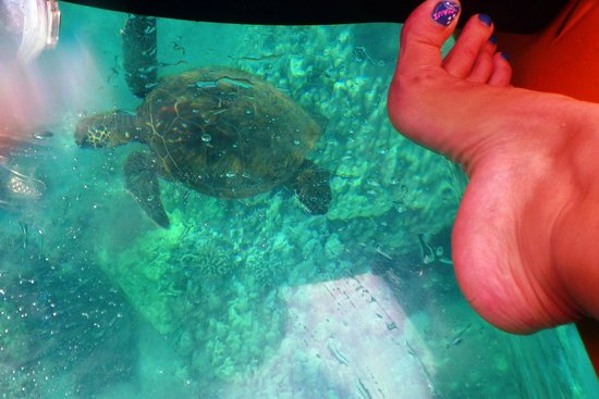 Clear Kayaks Maui: Easy to see sea turtles and sea life through clear bottom. My kids loved it!