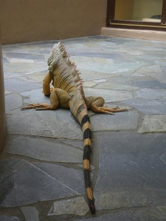 Aquaworld Aquarium & Reptile Rescue Centre: Trouble a.k.a. Squirt