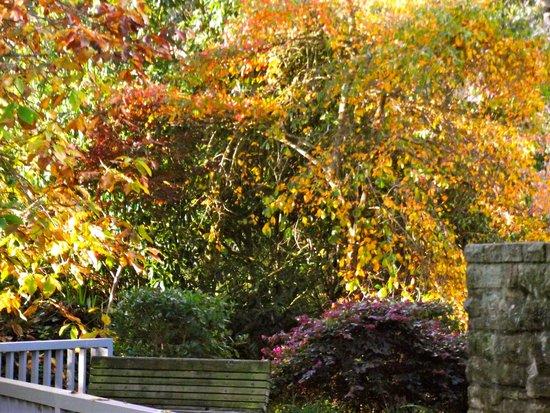 Hamilton Gardens: colourful shrubs