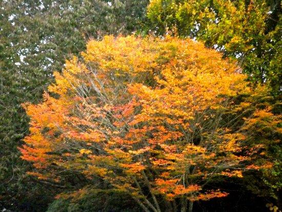 Hamilton Gardens: autumn leaves