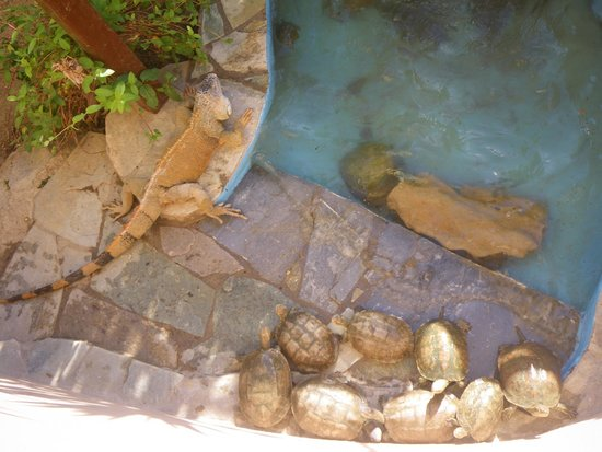 Aquaworld Aquarium & Reptile Rescue Centre: Relaxing by the pool