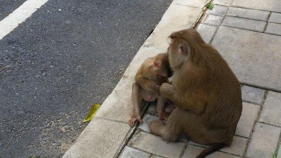 Monkey Hill: Monkey babies :)