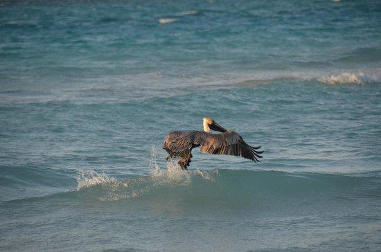Be Live Experience Turquesa: живность на пляже