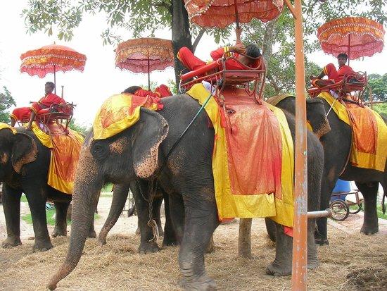 Elephantstay: 象