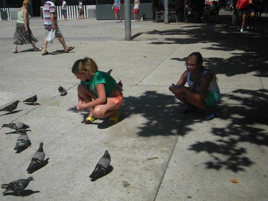 Astoria Park: Дети кормят голубей.