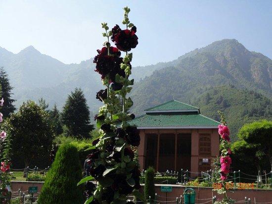 Chashme Shahi Gardens : Classic !!!