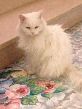 Hotel Gatto Bianco: il gatto bianco