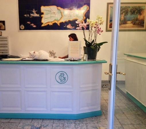 Hotel Gatto Bianco : the cat taking a nap on the reception desk