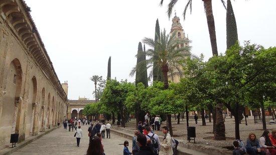 Cathédrale de Cordoue : A Must Visit