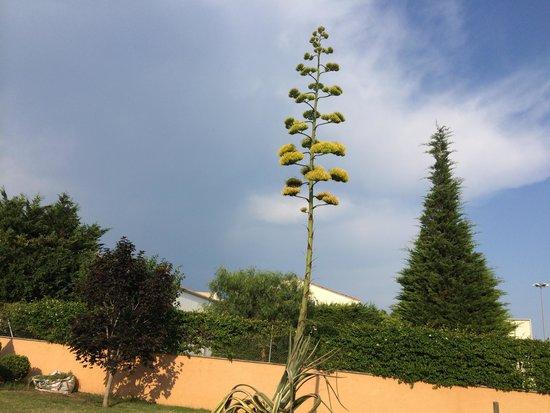 Hotel Restaurant Bon Retorn: Sehr gepflegter Garten