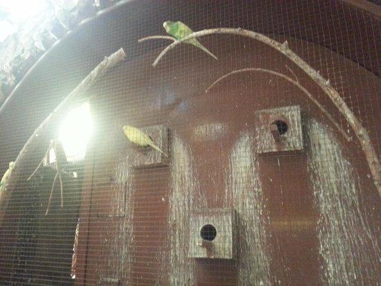 Felfela: The bird's home