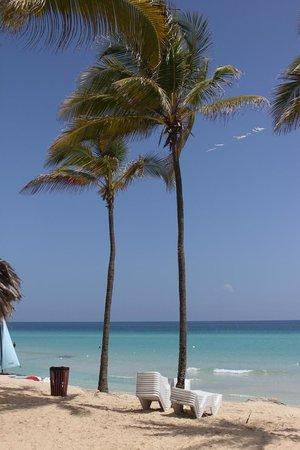 Playas de Este : Playa y Plameras