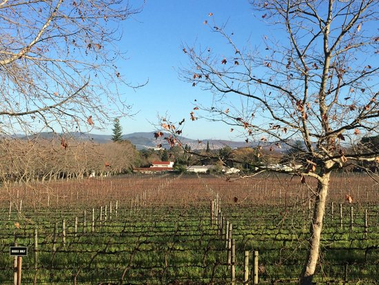 Lanzerac Hotel & Spa: View of their vines in winter - sunny day