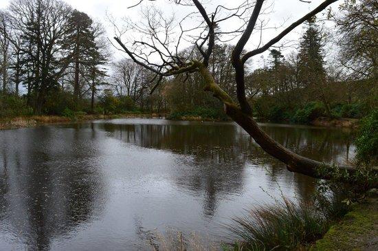 Llanerchaeron: A small lake