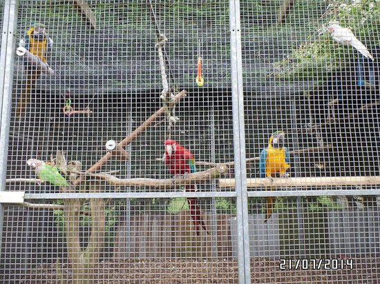 Lincolnshire Wildlife Park: Some of the parrots