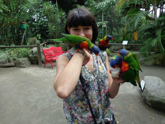 Jardin Botanique de Deshaies : loriquet