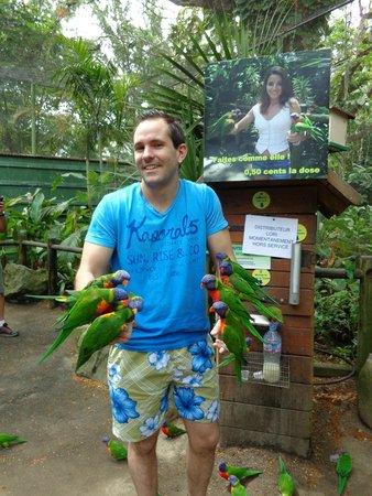 Jardin Botanique de Deshaies: loriquet