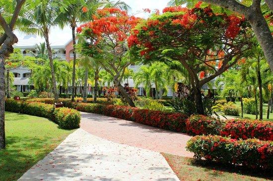 Iberostar Punta Cana: Шикарная территория отеля