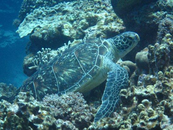 Kerama Islands: 慶良間ダイビング