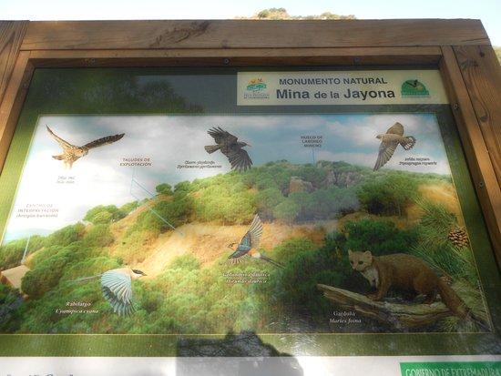 Monumento Natural Mina La Jayona: A display a long the route