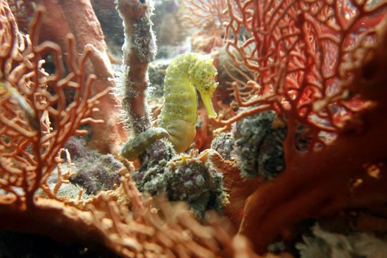 Phuket Dive Tours: happy days