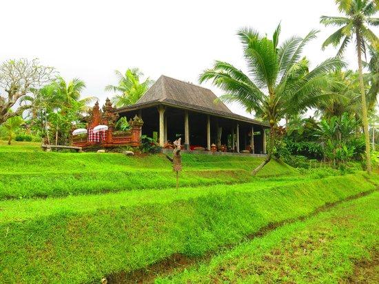 Chapung SeBali Resort and Spa: Spa