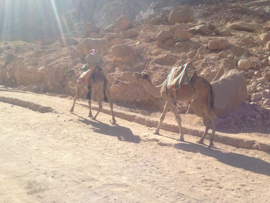 Mount Sinai: Way up to the St. Catherine (Monestry)