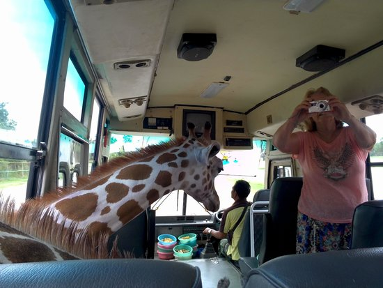 Safari Park Open Zoo : Watch out but they are very tame and just want to be fed!!