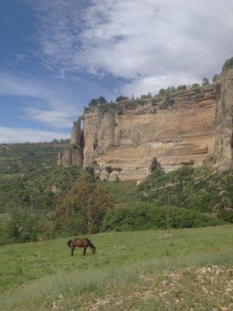 El Tajo de Ronda: 何故か馬が繋がれていました。