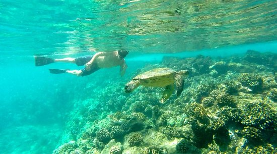 Aqua Adventures: Getting up close and personal with the turtles! Loved it!