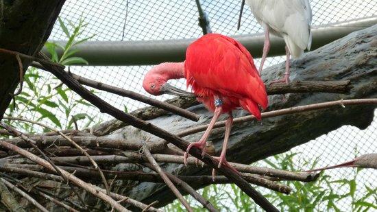 Prager Zoo: Цвет бесподобный!