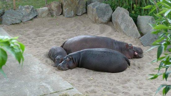 Prager Zoo: В жару после летнего дождя.