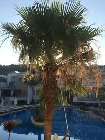 The Lesante Luxury Hotel & Spa: Palm Pruning early in the morning