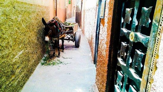 Riad Maissoun : Припаркованный ослик в переулке перед риадом